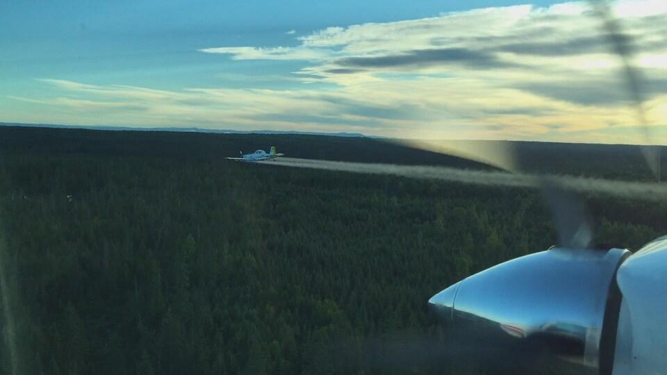 Un avion de Forest Protection Limited en pleine opération d'arrosage contre la tordeuse des bourgeons de l'épinette dans le nord du Nouveau-Brunswick.