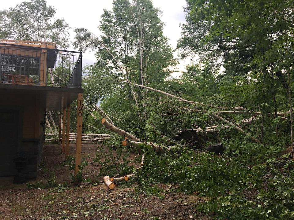 Plusieurs arbres sont tombés au Lac-Saint-Jean.