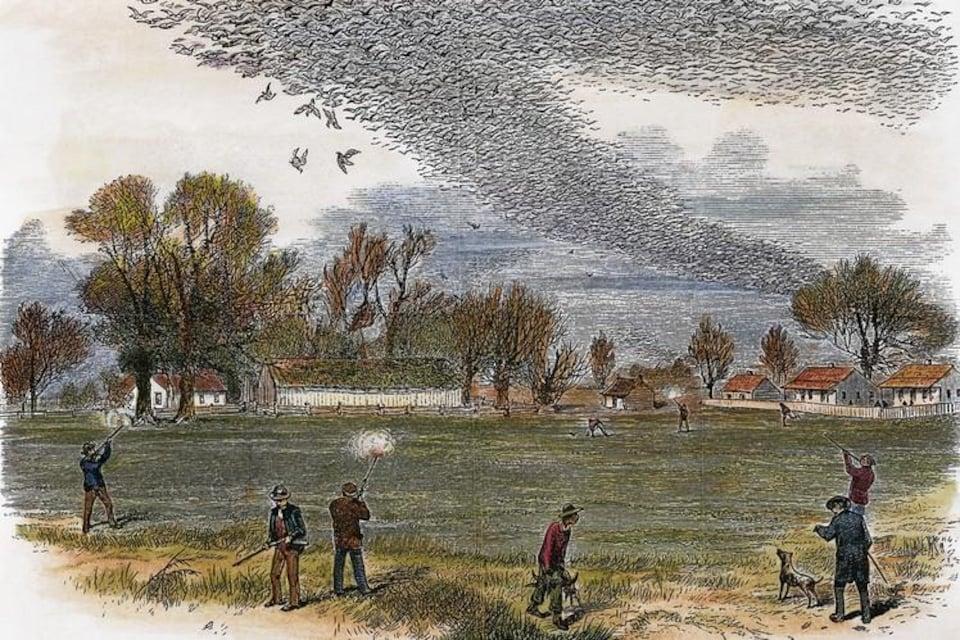 Illustration d'une partie de chasse à la tourte voyageuse.