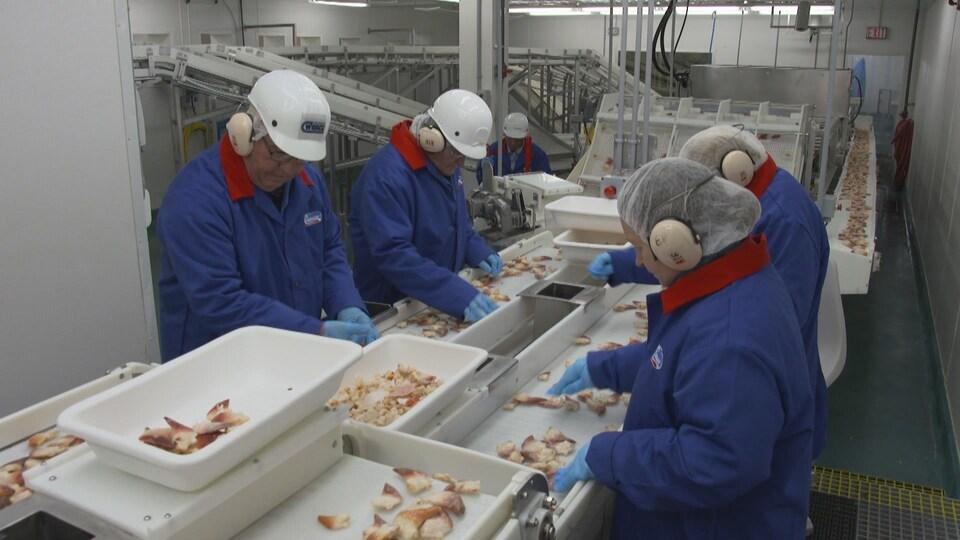 Des travailleurs à Grand Bank, à Terre-Neuve-et-Labrador, apprêtent la mactre de Stimpson.