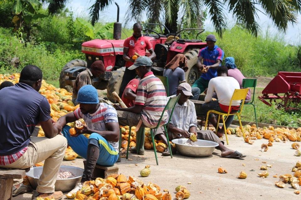 des Camerounais ouvrent des cabosses