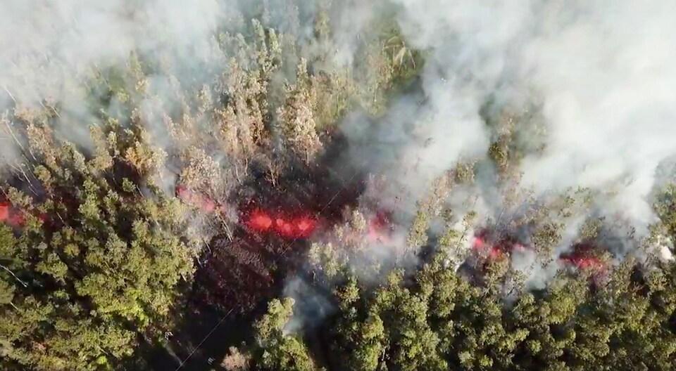 De la lave émerge du sol par une fissure dans un secteur boisé entourant le volcan.