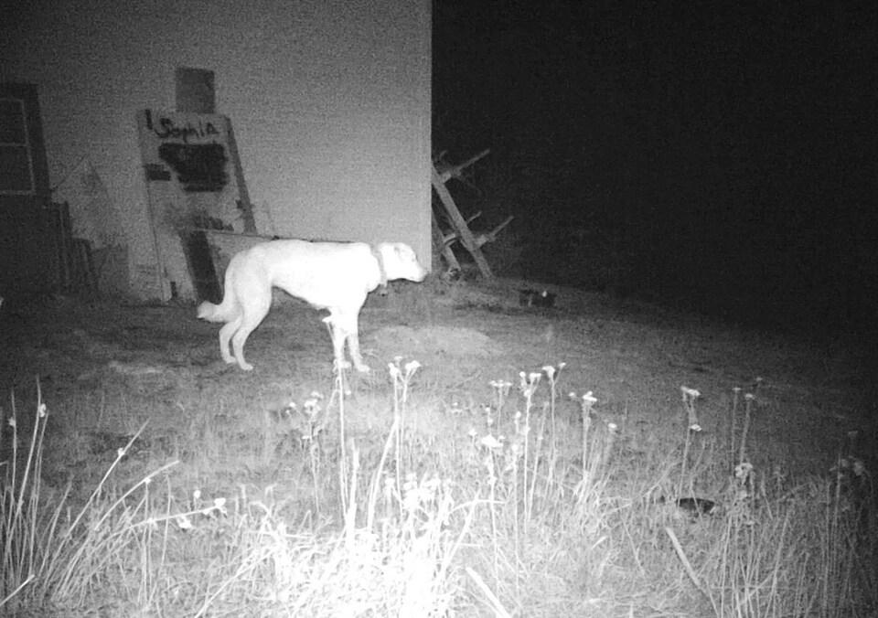 Image en noir et blanc prise la nuit d'un chien près d'un bâtiment.