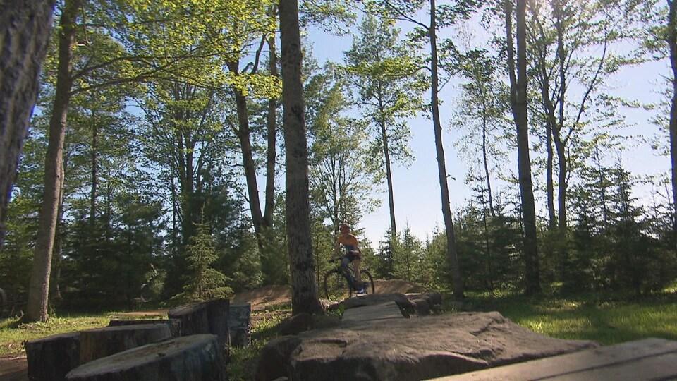 Vélo sur une piste, au travers d'une forêt.