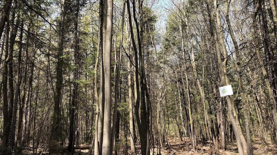 Le Boisé Neilson avec ses arbres