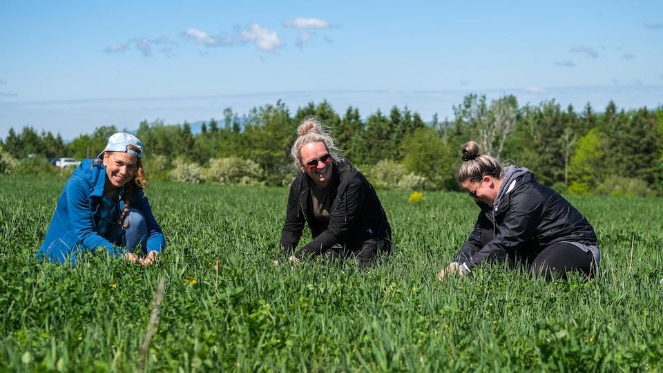 Trois femmes cueillent des marguerites.