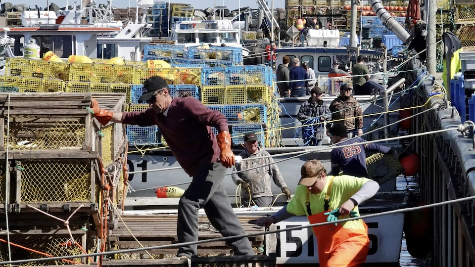 Des dizaines de pêcheurs chargent des casiers à homard sur leurs bateaux amarrés au quai.
