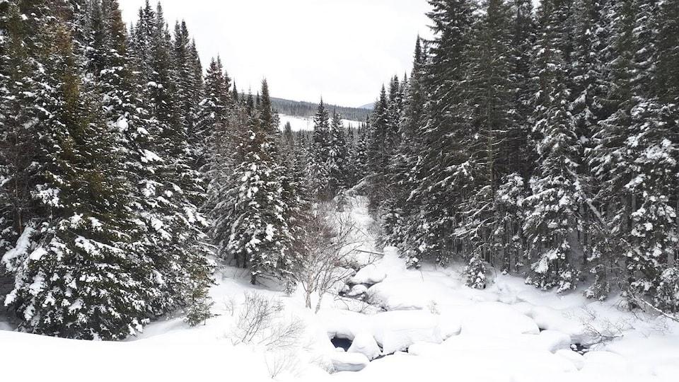 La forêt Montmorency en hiver.