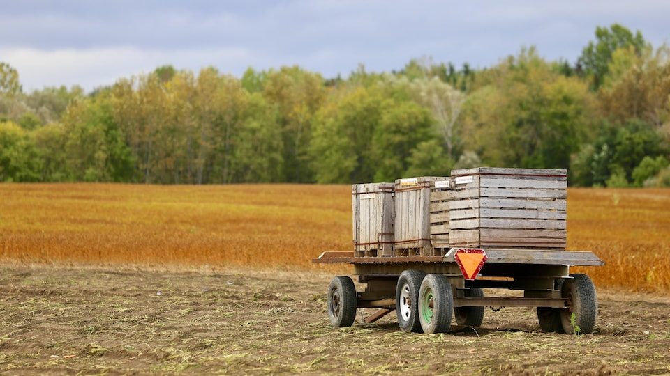 Un chariot dans un champ