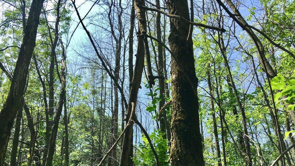 Des arbres dépourvus de feuilles.