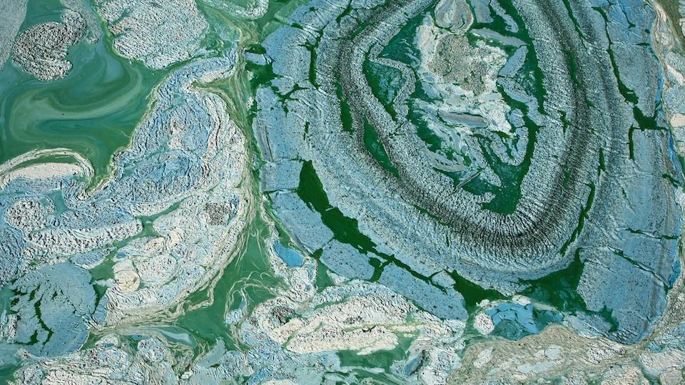 Une eau verdâtre sur laquelle flotte des algues bleutée.