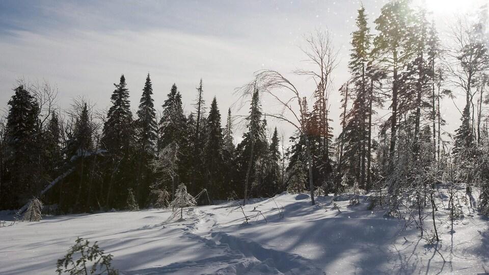 Le sommet enneigé d'un mont de Charlevoix.