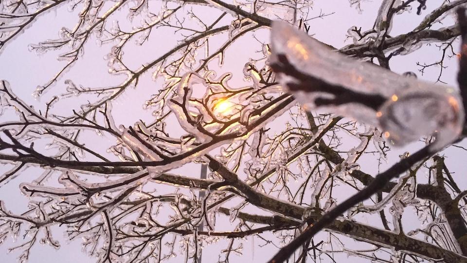 Des rayons de soleil filtrent à travers des branches d'arbre gelées.