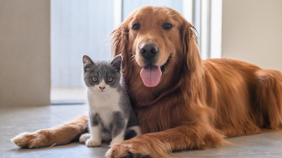 Un chaton et un chien, assis côte-à-côte sur un plancher devant une porte-patio.