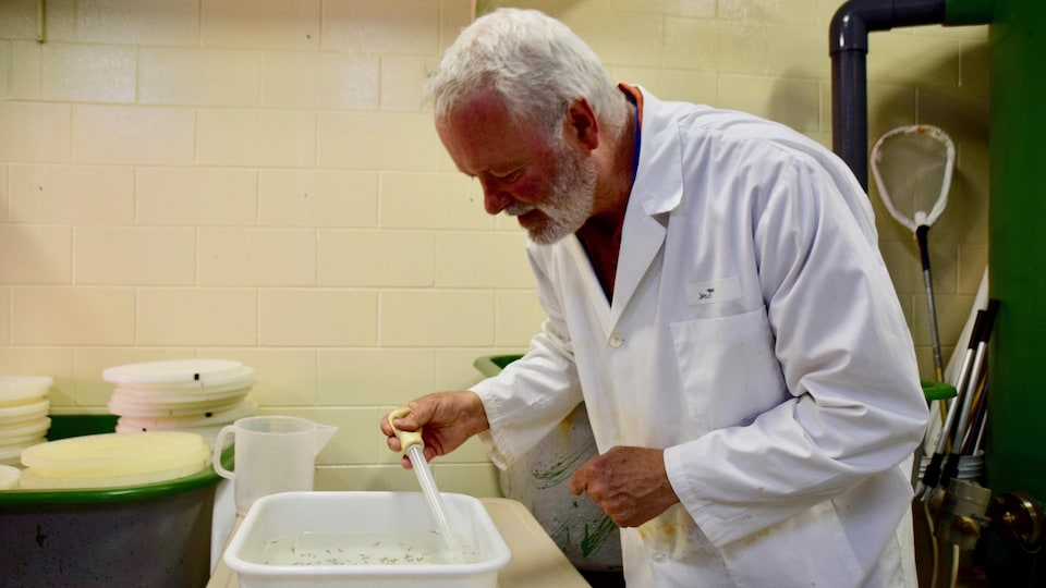 Le biologiste Jean Côté manipule des larves de homards à l'Écloserie de Grande-Rivière.
