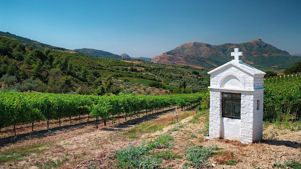 Paysage de collines recouvertes de vignes avec une petite chapelle votive au premier plan.