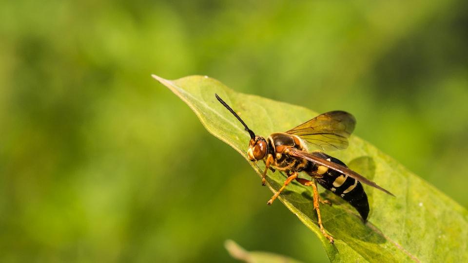 abeille sur plante verte