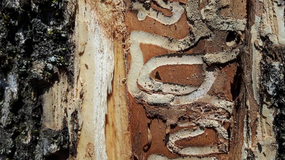 Un arbre strié.