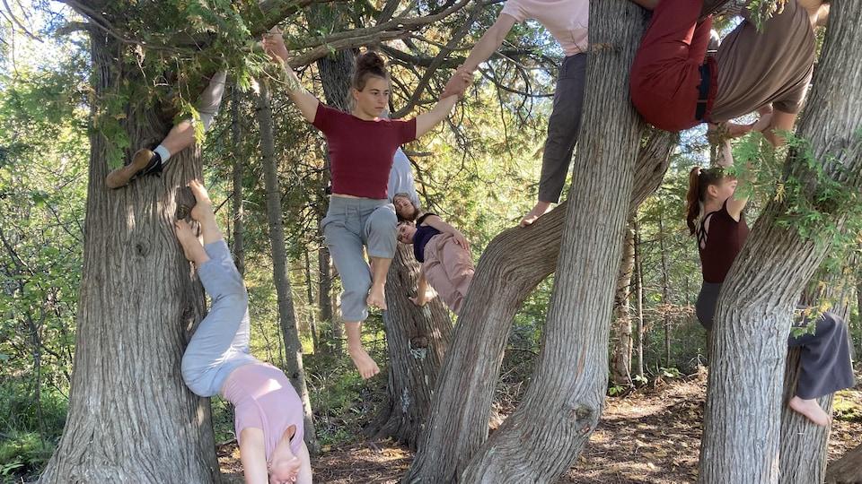 Huit artistes utilisent différents arbres pour réaliser des figures acrobatiques.