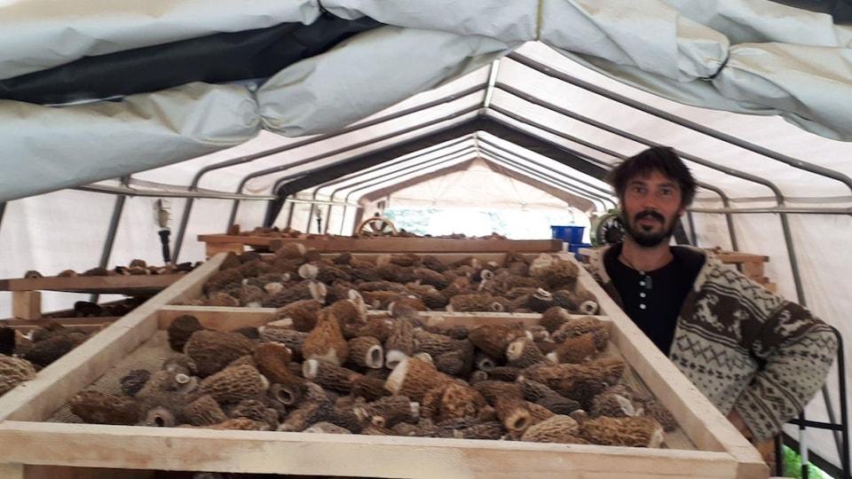Ben Patarin, dans la tente de séchage où des morilles fraîchement cueillies sont entassées dans des caisses de bois.