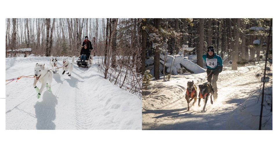 deux traîneaux à chiens en hiver
