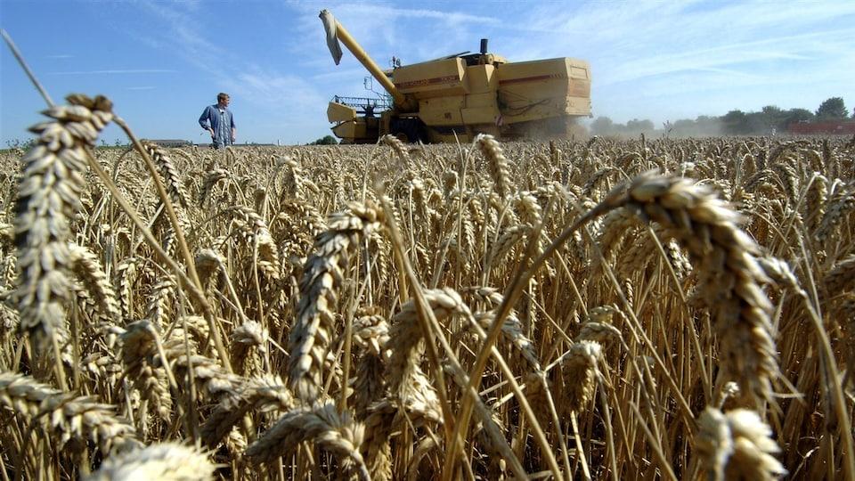 Un fermier au milieu d'un champ pendant qu'une moissonneuse récolte le blé. Des gerbes de blé sont en avant-plan.