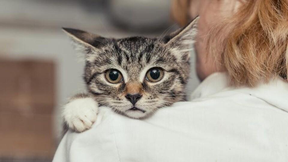 Un chat sur l'épaule d'une femme.