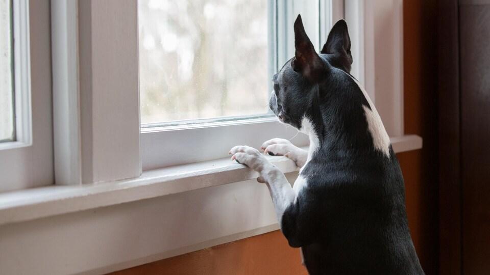 Un chien regarde par la fenêtre de la maison dans laquelle il se trouve.