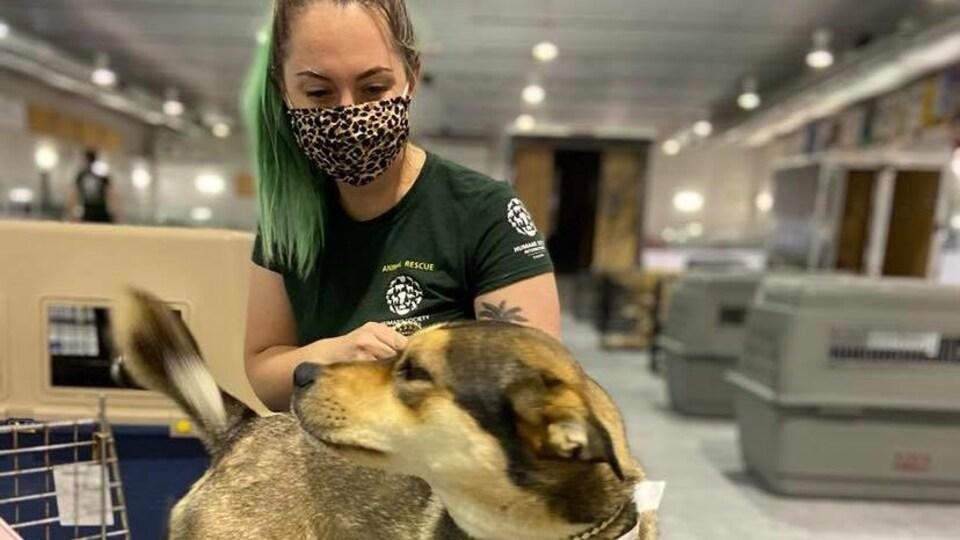 Une bénévole de l'organisme Chiots nordiques s'occupe d'un chien de la communauté de Pessamit.