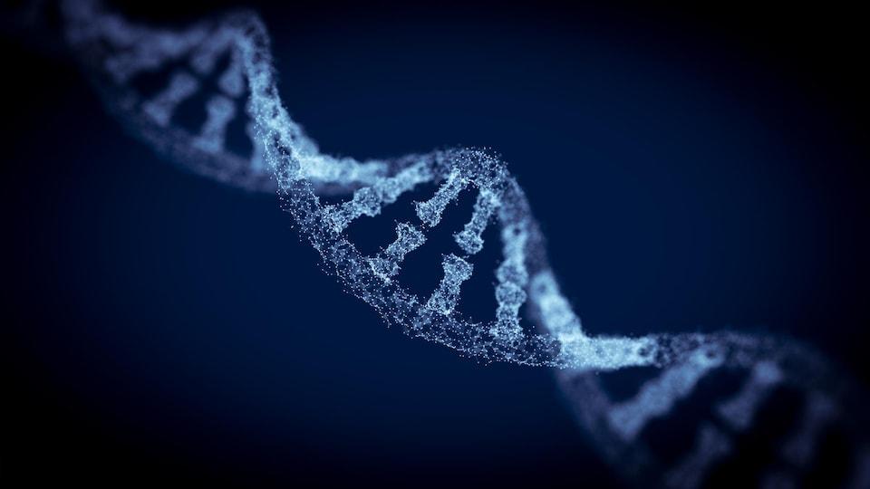 Une représentation en trois dimensions d'une branche d'ADN composée de dizaines de minuscules points blancs sur un fond bleu sombre.