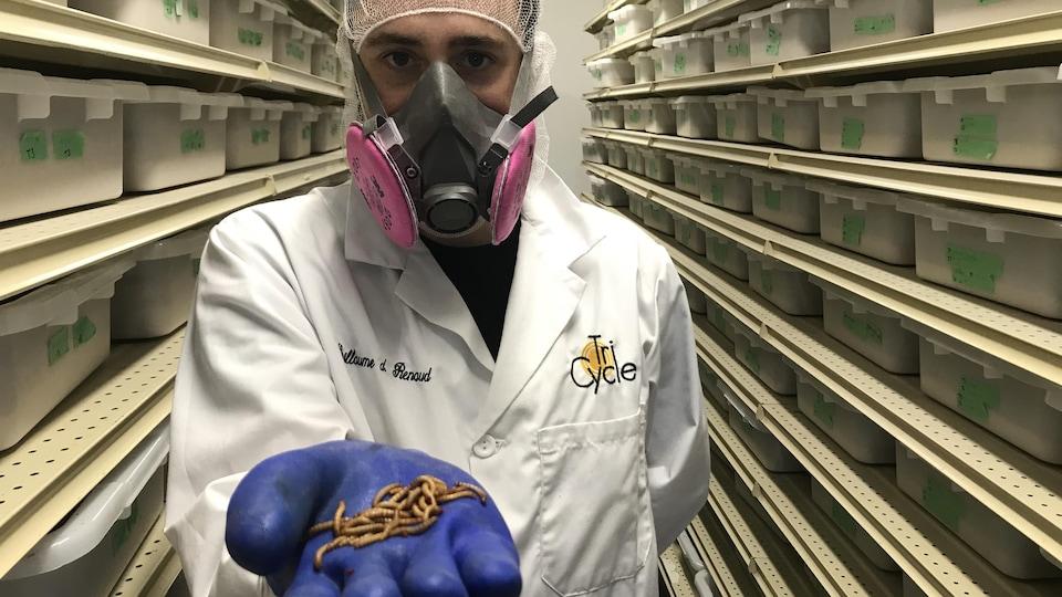 Un homme tient dans sa main gantée des larves de ténébrions.