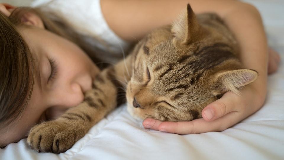 Une fillette fait une sieste en compagnie de son chat.
