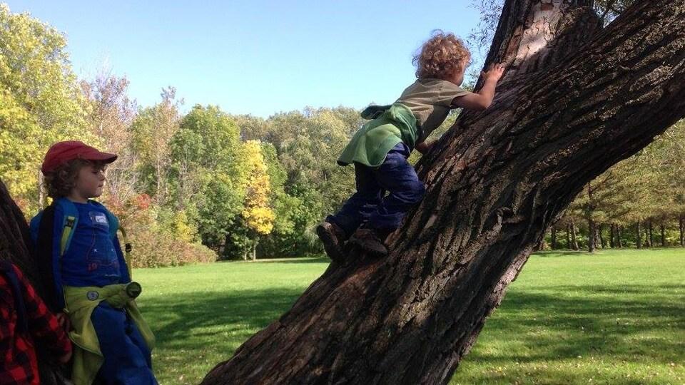 Deux enfants s'amusent à grimper dans arbre au Domaine de Maizerets.