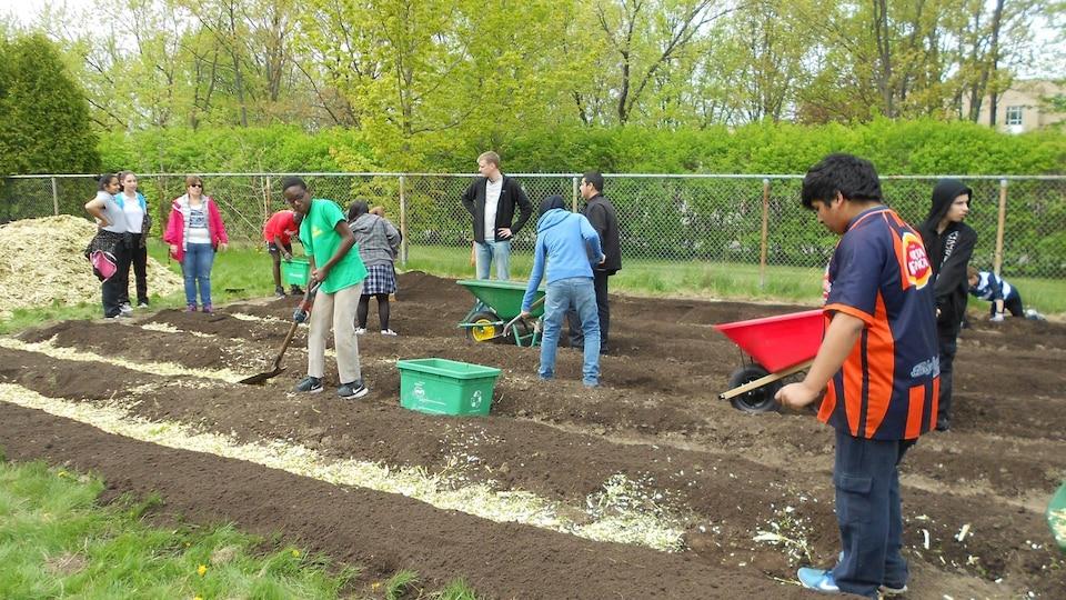 Des jeunes jardinent sur le terrain de l'école secondaire Louis-Joseph-Papineau.