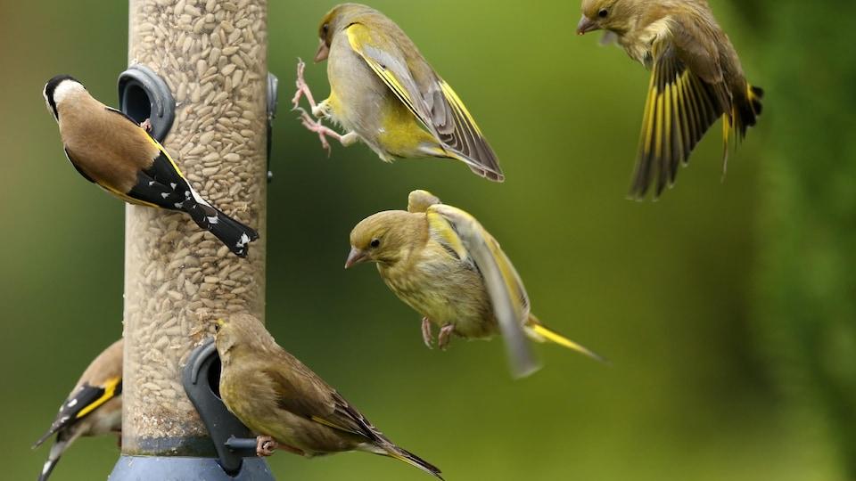 Des oiseaux près d'une mangeoire