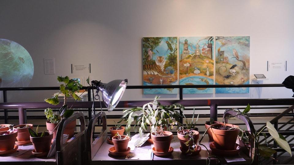 Scène de l'exposition, avec au premier plan des plantes et sur le mur du fond un tryptique.
