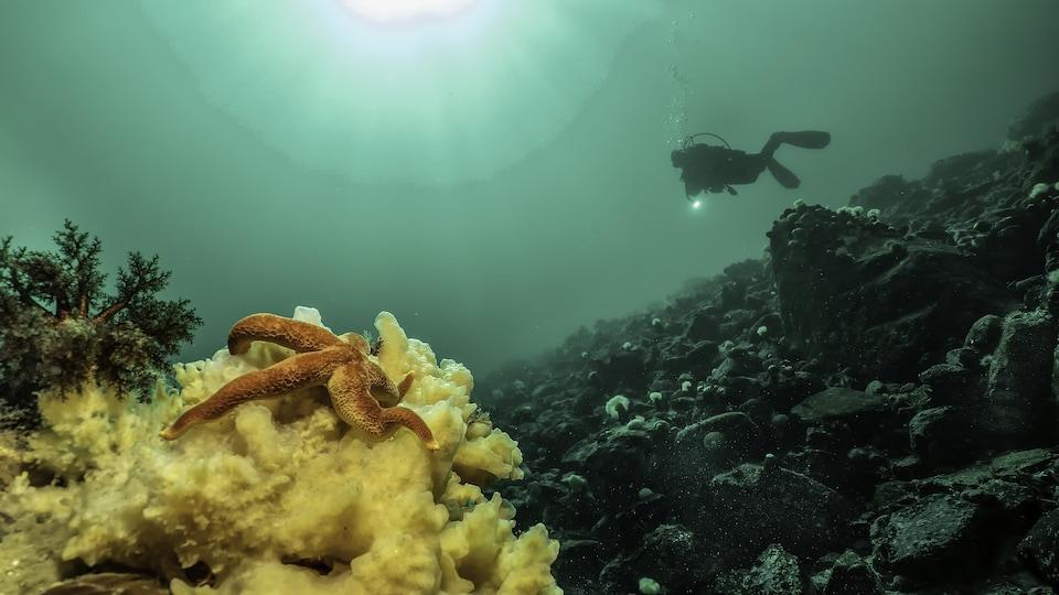 Les profondeurs du fleuve Saint-Laurent filmées par Patrick R. Bourgeois et Geneviève Bilodeau.