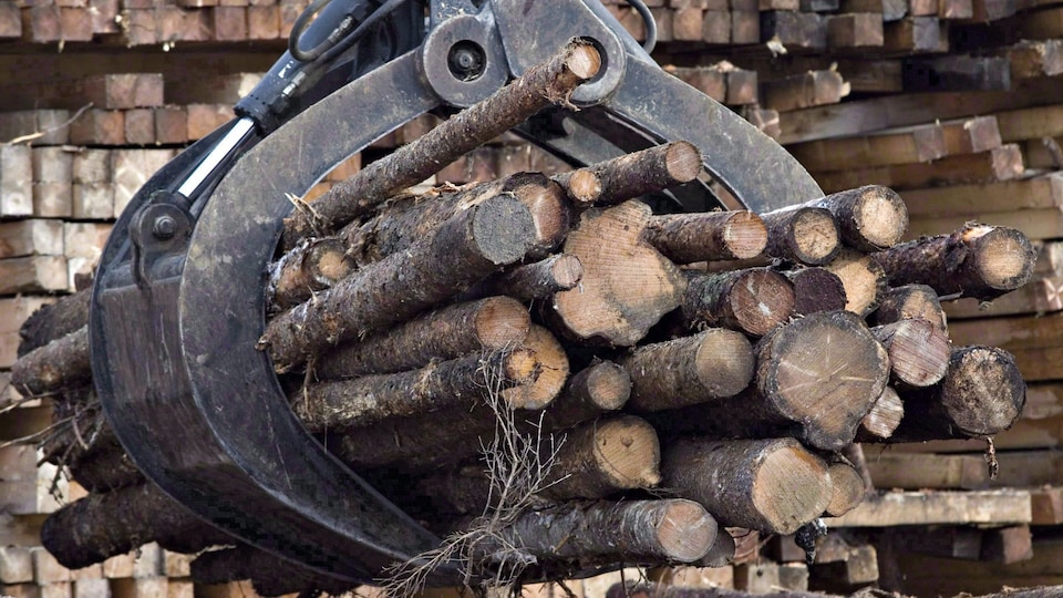 Des billots et des planches de bois.