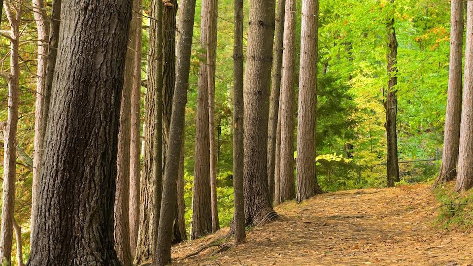 Un sentier dans une forêt en été