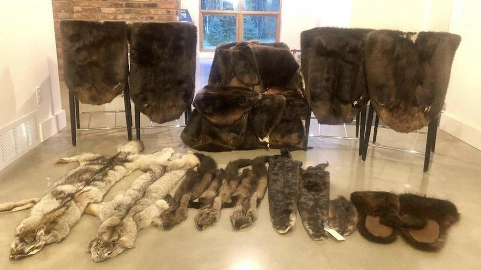 Environ une vingtaine de fourrures sont étendues sur des chaises et le sol.
