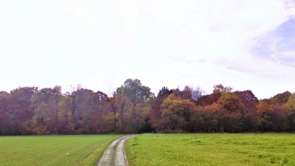 Un chemin de terre mène vers un boisé.