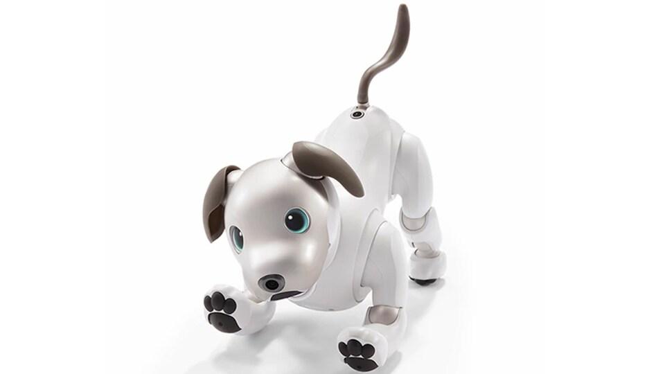 Une photo montrant le petit chien robot en position de jeu.