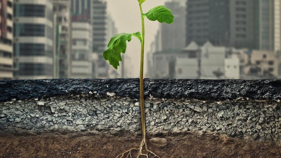 Une jeune plante qui pousse au travers d'une surface asphaltée dans une ville.