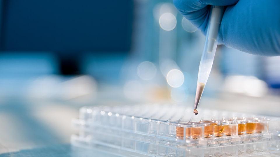 Un technicien de laboratoire injecte un liquide dans une plaque microtitre.