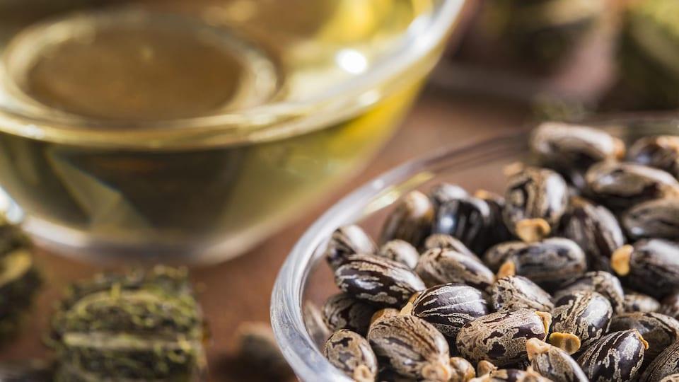 Des graines et de l'huile de ricin sur une table.