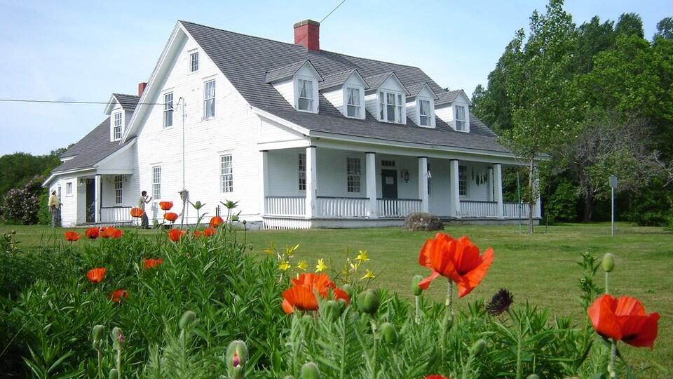 La maison Busteed, en bon état, avec des pavots orange à l'avant-plan.