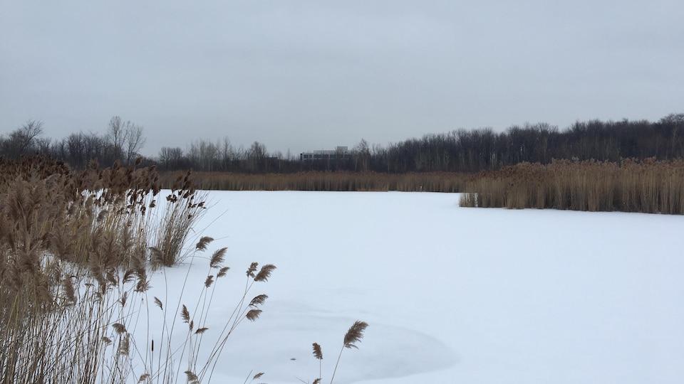 Le marais des Sources en hiver, recouvert de neige et entouré par des roseaux.