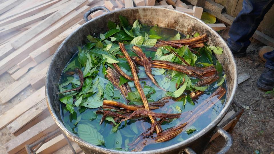 Une marmite d'ayahuasca est en préparation.