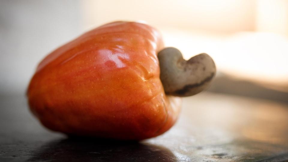 Un noix de cajou est déposée sur une surface plate.