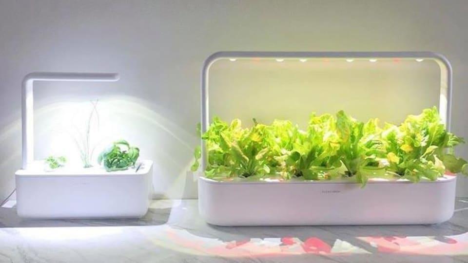 Des plantes intérieures sont disposées dans des réceptacles connectés.